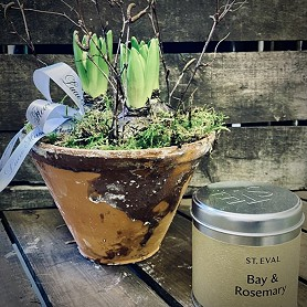 Hyacinth bulbs in a planter with St Eval scented candle