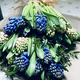 Flower wrap of British-grown scented hyacinths