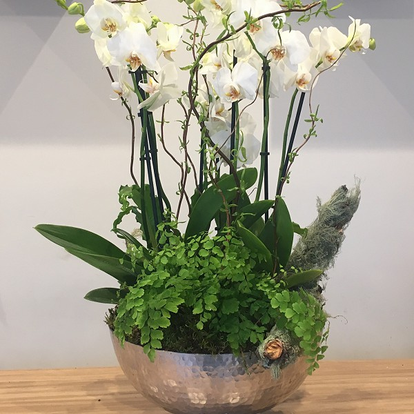 Corporate Flowers orchids and ferns